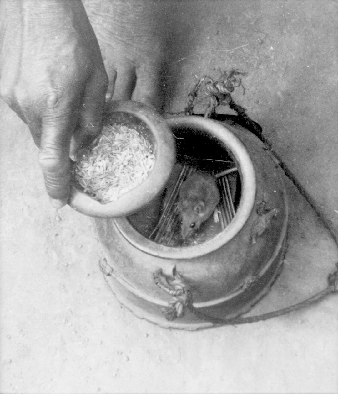 Baule mouse oracle. Photographed by Martin Lippmann (who accompanied Hans Himmelheber), 1935. Image courtesy of: Frobenius Institute, Frankfurt am Main, Germany (#EBA-B 02563).