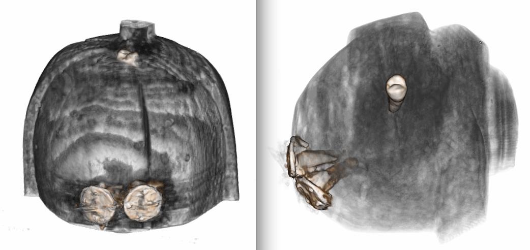 teeth-molars-inserted-in-a-fang-ntumu-figure-scan